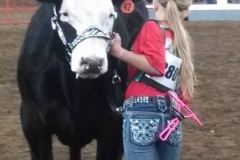 Cattle Show Halters